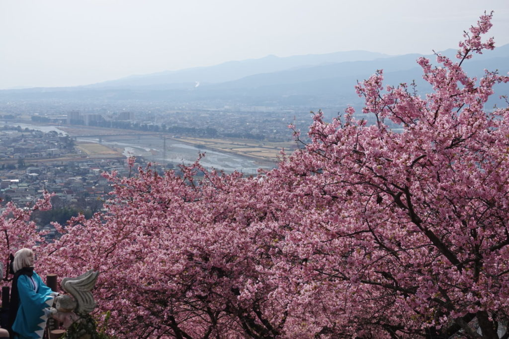 Matsuda Sakura фестивал Cherry Blossoms и Cosplayers